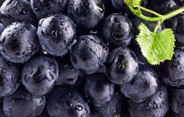 Полезные свойства черного винограда с косточками