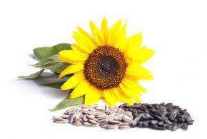 семечко, подсолнух, польза, вред, противопоказание, семена подсолнечника