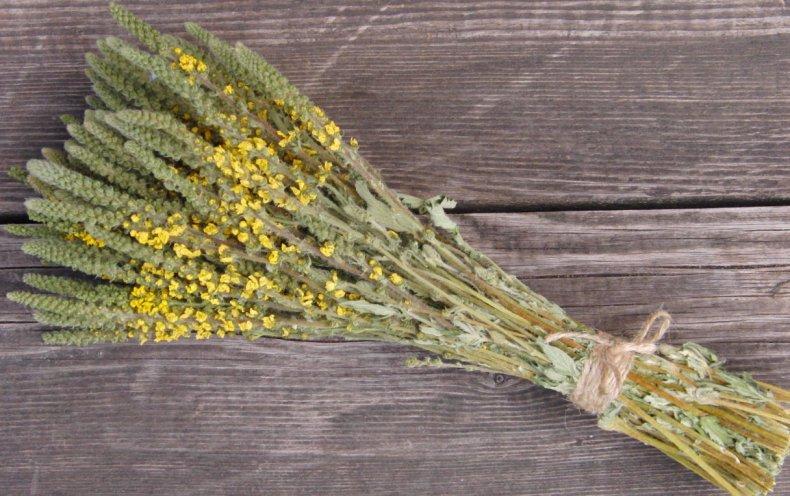 трава, репешок, польза, вред, лечебный