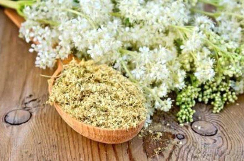 Белоголовник (лабазник вязолистный или таволга) польза и вред, лечебные свойства и