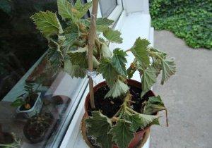 Растение поникло