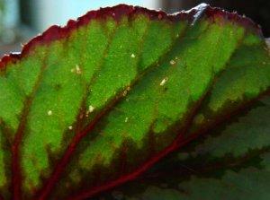 Повреждение листьев