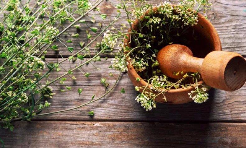 ae9861238c8b Пастушья сумка: лечебные свойства и противопоказания, ботаническое ...