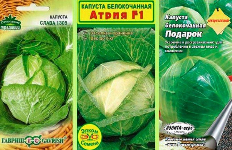 Семена среднеспелой капусты