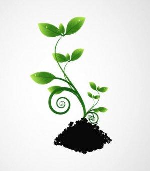 Какие растения называют декоративными: названия популярных представителей