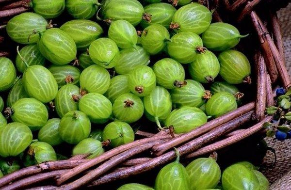 Крыжовник  полезные свойства обычной ягоды