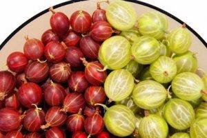 Состав и полезные свойства крыжовника, разнообразие применения зеленых ягод