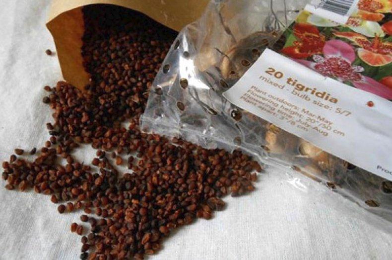 Выращивание из семечки