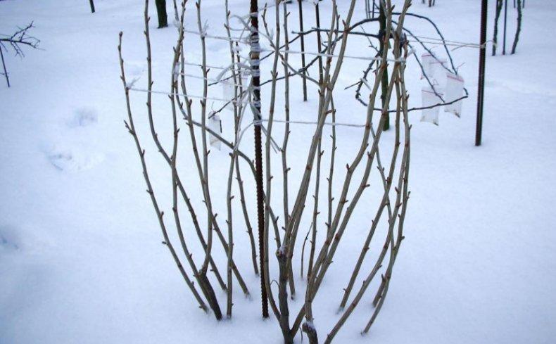 Удаление снега с кустарников