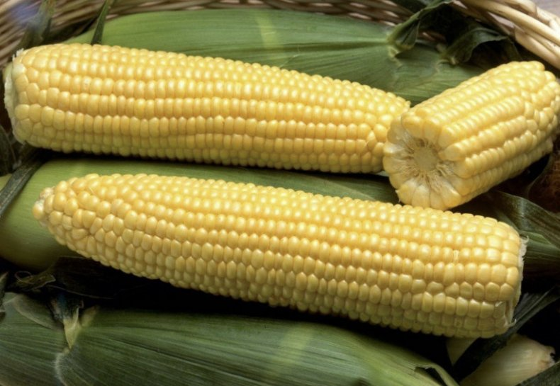 Сахарная кукуруза