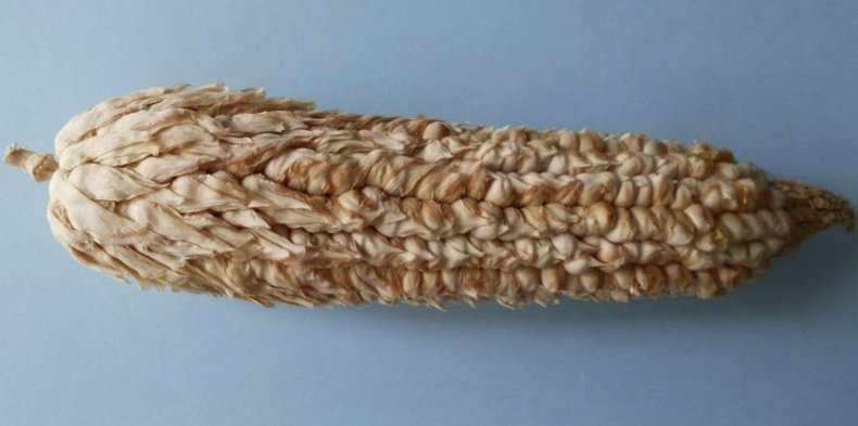 Пленчатая кукуруза