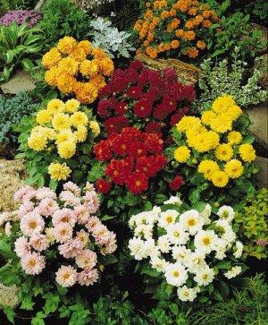 Весёлые ребята цветы фото