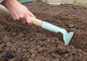 Высеивание растения