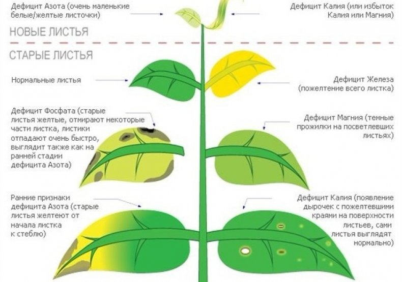 Реакция растений на нехватку элементов