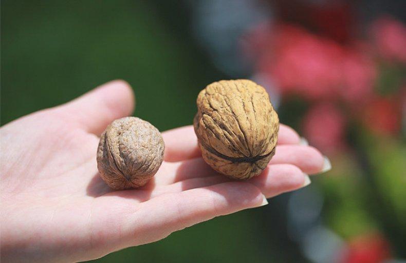 Семена ореха
