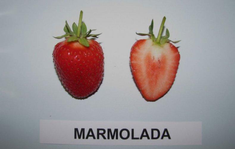 Мармолада