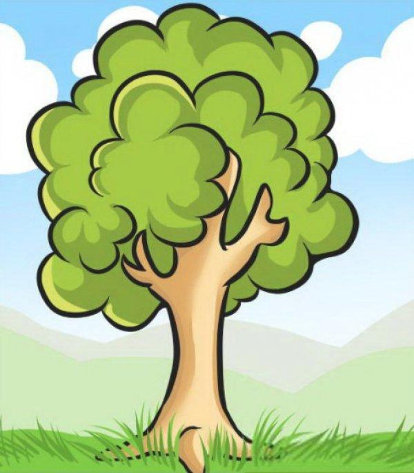 Лиственные деревья - самые популярные: фото, названия, описание, разновидности