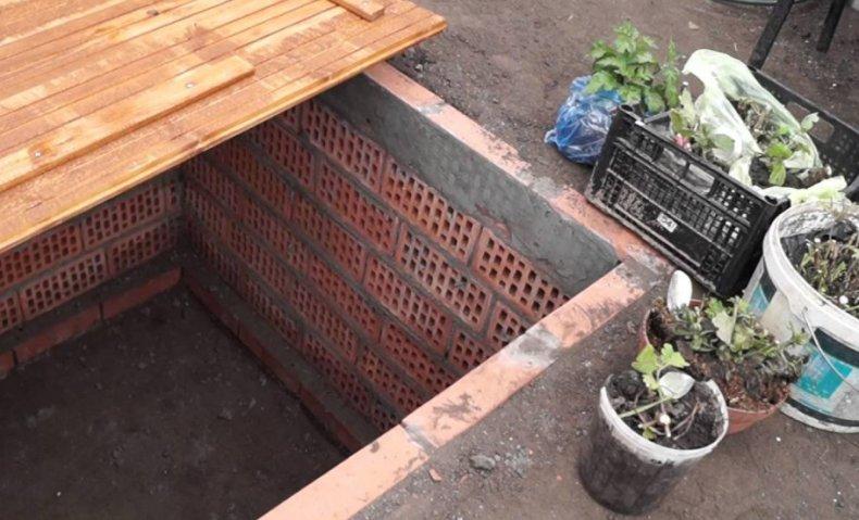 Хранение хризантем в погребе