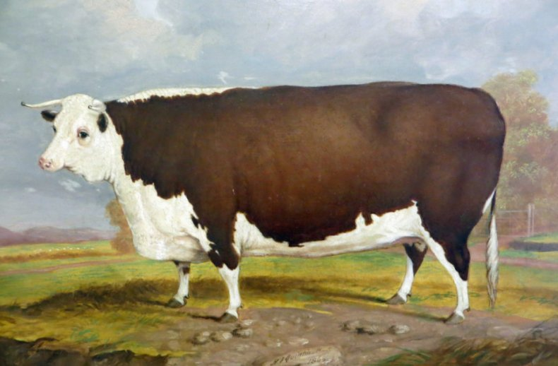 Херефордский бык на картине