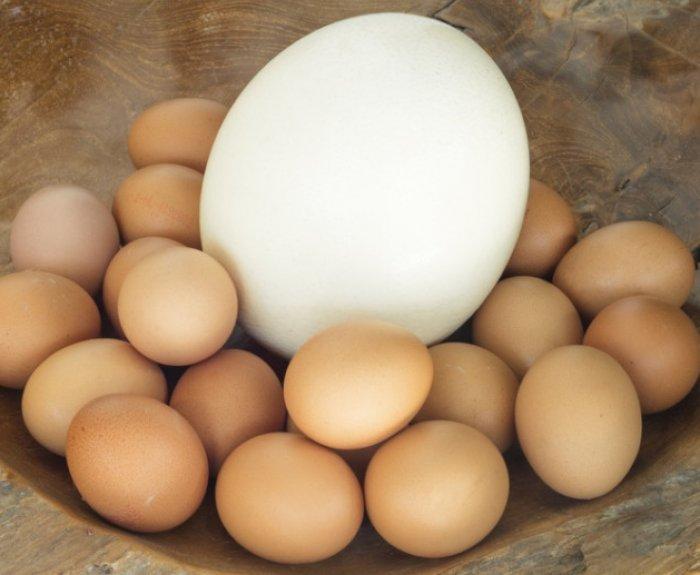 Страусиные яйца картинки