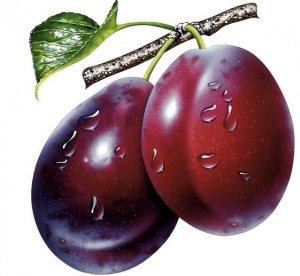 слив, ягода, фрукт, ягода фрукт, бытовых задачах