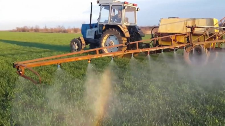 Подкормка пшеницы