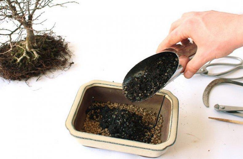 Бонсай из фикуса как правильно формировать растение в домашних условиях