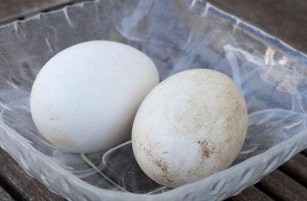 Гусиные яйца: польза и вред, что можно сделать, сколько ...