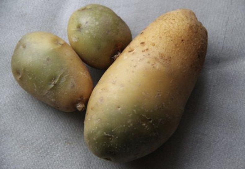 Позеленевшая картошка
