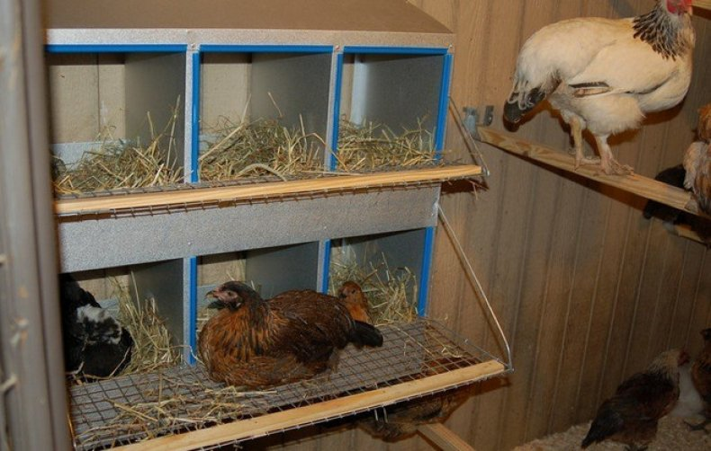 содержание, зима, домашний, домашней птицы