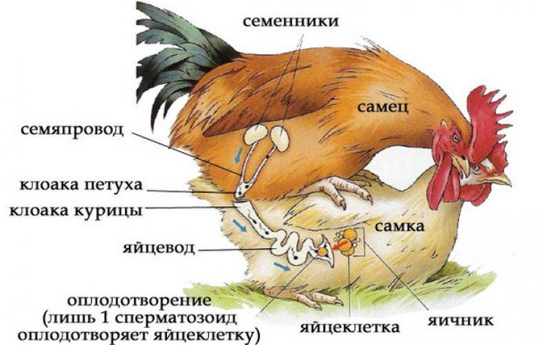Все стихи Расула Гамзатова Родной язык