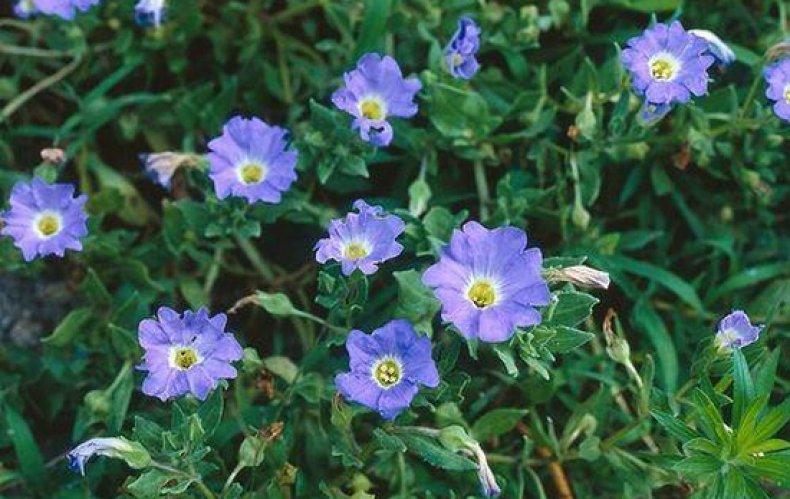 статье нолана фото цветы какой мере является