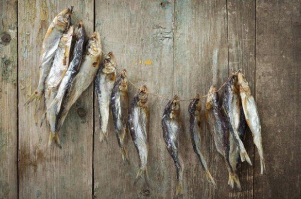 Как сушить рыбу в домашних условиях летом без мух 660