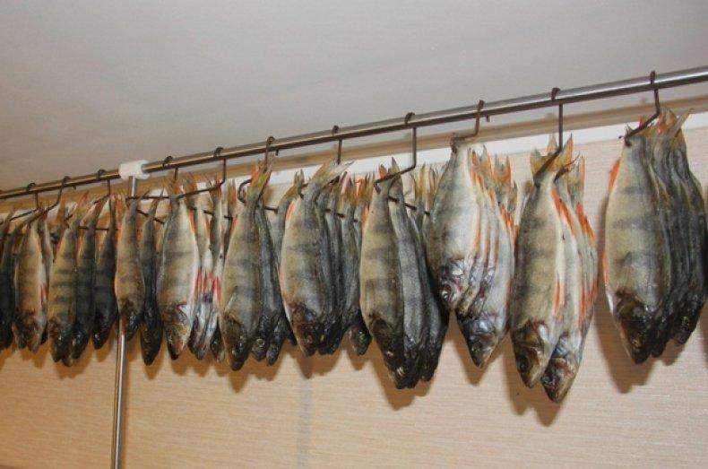 Рыба подвешивается за хвост