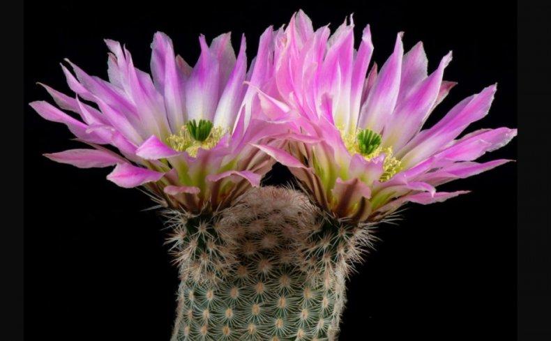 суккуленты, уход, домашний, представитель флоры