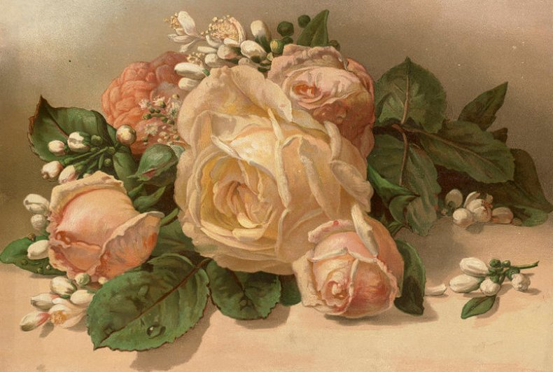 Викторианское изображение розы