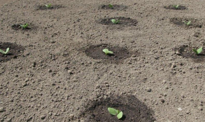 Выращивание огурцов