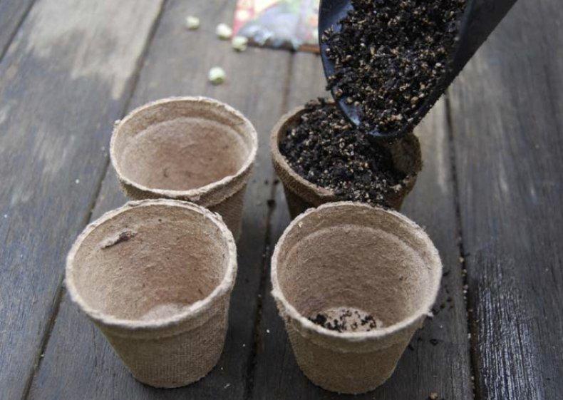 Заполняем торфяные стаканчики почвой