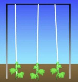 Вертикальная подвязка