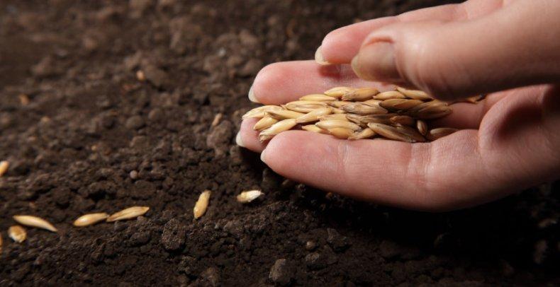 Высаживание семян на рассаду