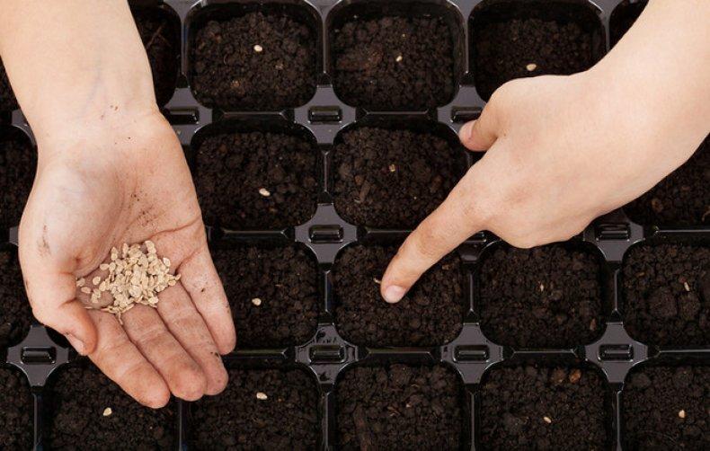 Процесс посадки семян