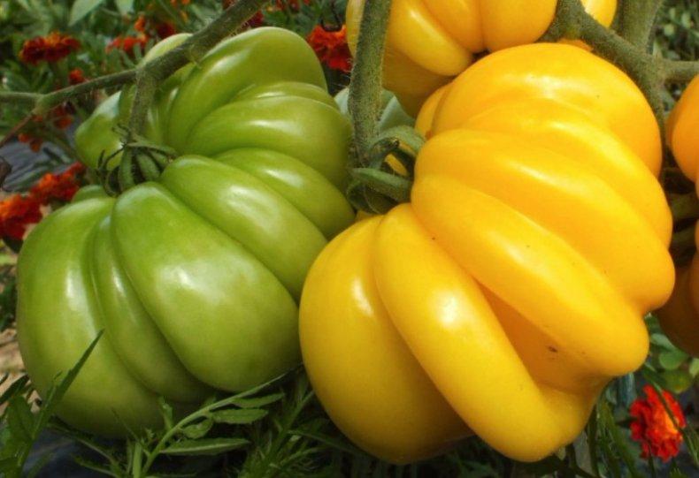 Помидор «Тлаколула де матаморос» желтый