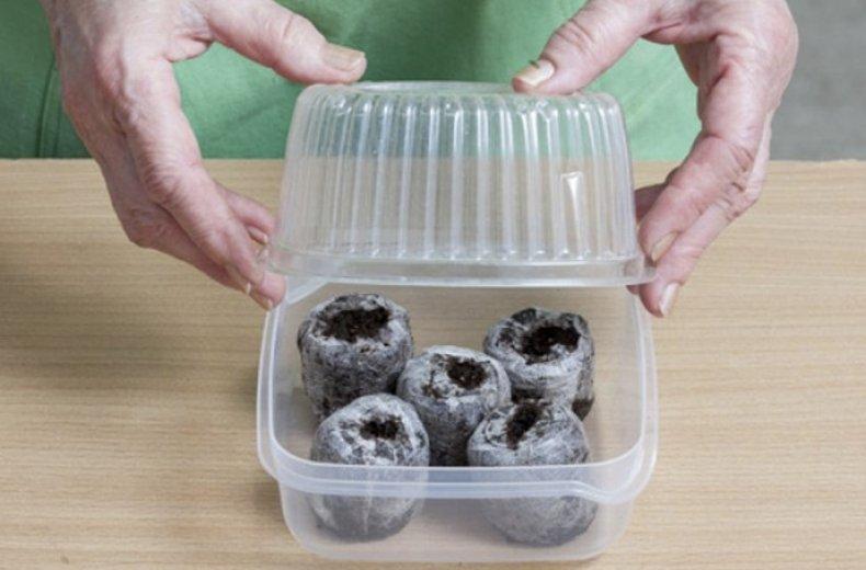 Посев в торфяные таблетки