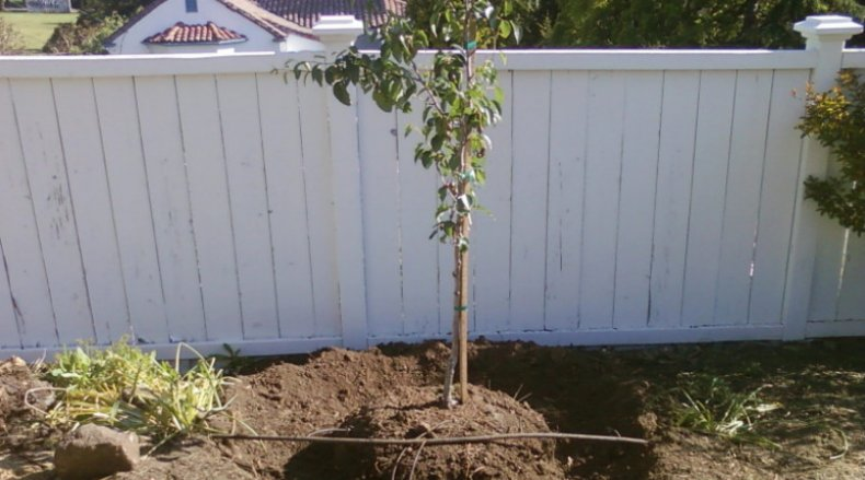 фруктовый, план, участок, посадка, дерево