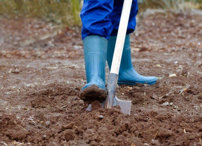 Подготавливаем почву для посадки