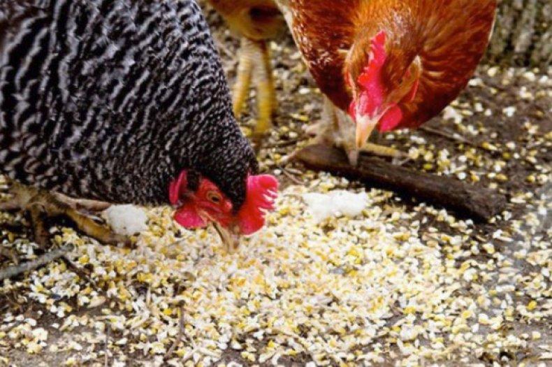 Включение витаминов в рацион кур, как профилактика заболевания
