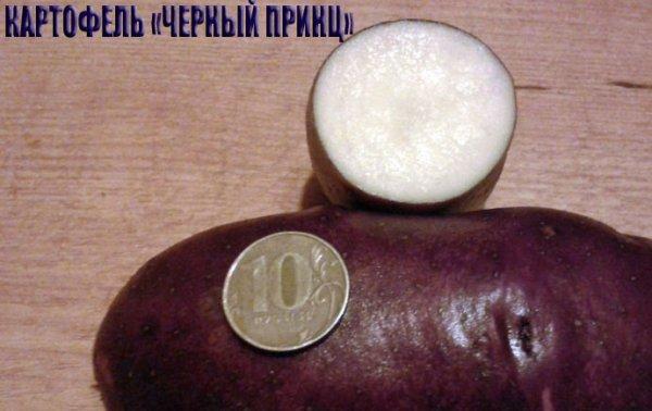Картофель барин: описание сорта с фото и отзывами