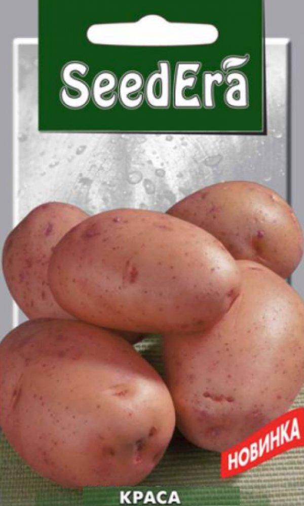 цвет картофель белла роса описание сорта фото отзывы выписка роддома