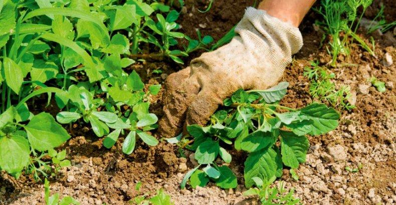 Удаления сорных трав