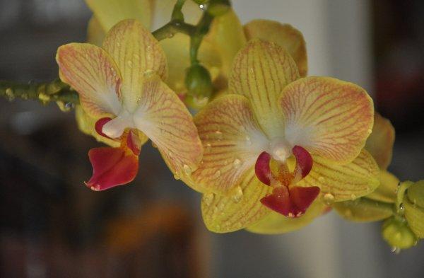 Болезни и вредители орхидей Особенности лечения